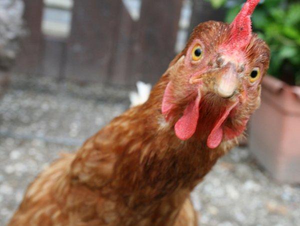 Голодавший из Воронежской области спалил курицу и