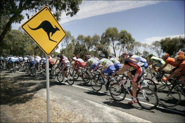 В Австралии кенгуру сбил велосипедистку