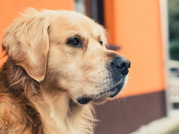 Житель Бурятии воровал собак односельчан и ел их