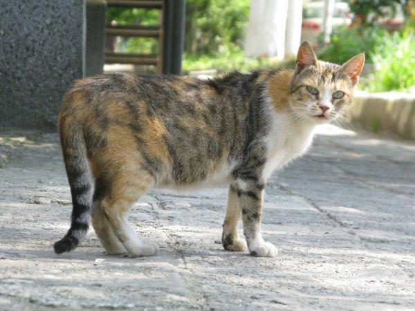 Пермский ветеринар выложила селфи с расчленённой кошкой