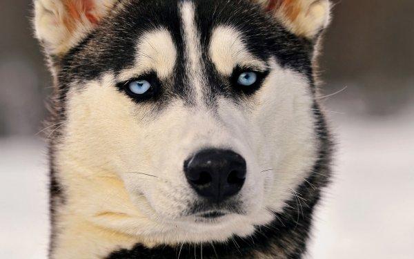 В Ростове выброшенный пёс долго бежал за автомобилем хозяев