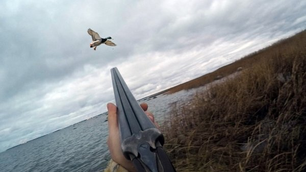 Охотник стал жертвой подстреленного гуся