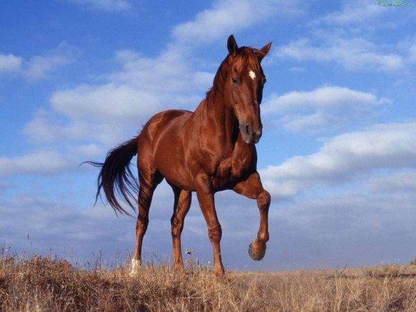 По дороге в Москве проносился испуганный конь с