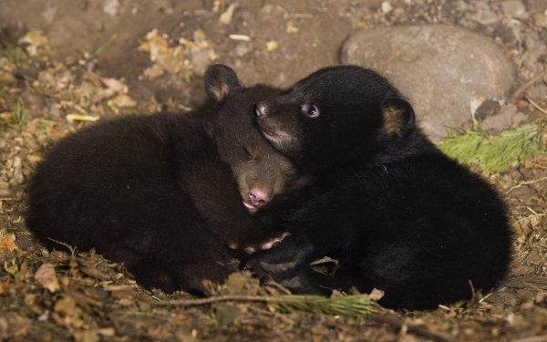 Двух новорожденных медвежат нашли на свалке в ТиНАО