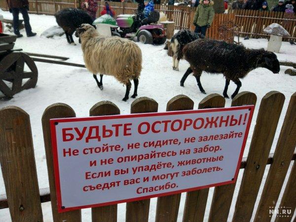 В детском парке Нижнего  Новгорода появились бараны-людоеды