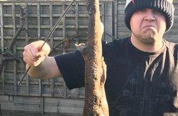 Житель Великобринании во дворе своего дома нашел кошачью акулу