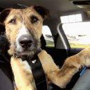 Собака за рулем автомобиля попала в кадр во время интервью о стрельбе в школе