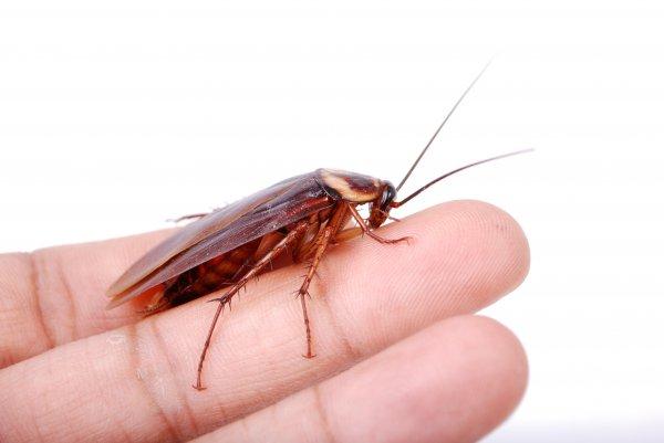В Екатеринбурге из головы девочки достали живого таракана