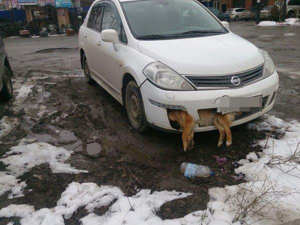 В Таганроге мужчина сбил собаку и ездил с трупом на бампере несколько дней