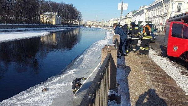 Спасатели Петербурга вызволили вмерзшую в лед чайку