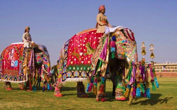 В Индии слон затоптал до смерти главу местной Лесной службы