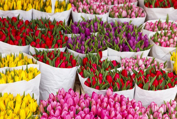 В Краснодарском крае мужчина украл у цветочницы 2 000 тюльпанов