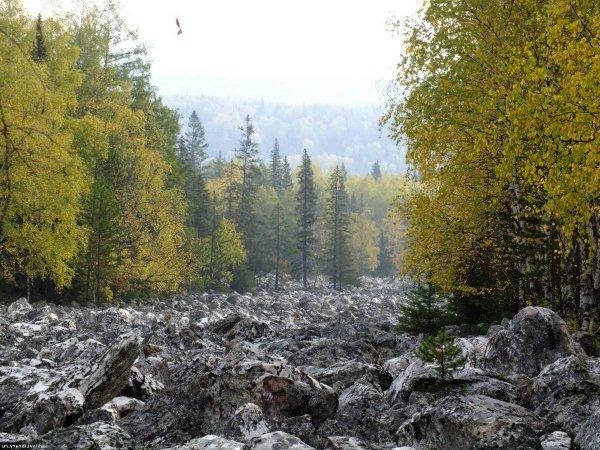 Турист из Южного Урала хотел жить в лесном массиве