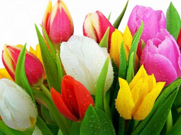 В Копейске голый парень дарит девушкам цветы