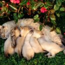 В Красноярске кошка со сломанным позвоночником охраняла своих котят