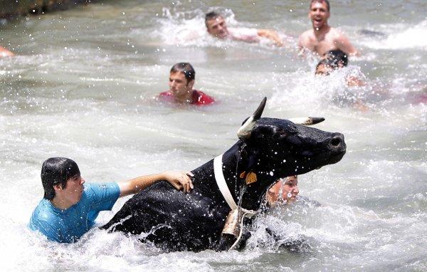 В Австралии на пляж вынесло быка и корову