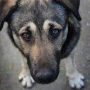 Рабочие Чернобыльской АЭС спасли собаку, забравшуюся на крышу саркофага