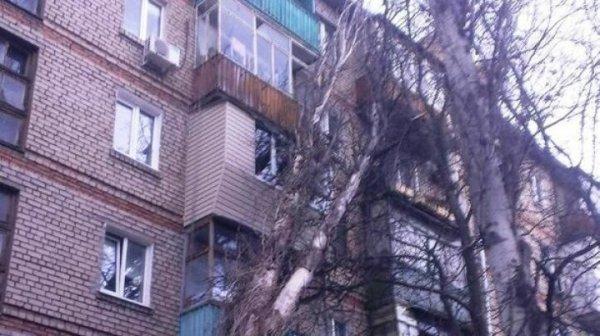 В Ростове громадный тополь упал на многоэтажный дом
