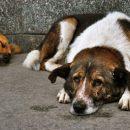 В Волгограде живодеры «подорвали» собаку