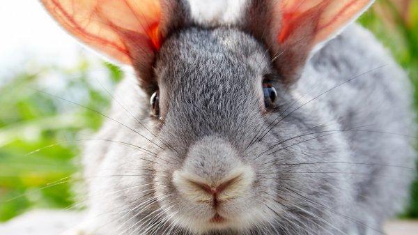 Злобный кролик покусал маму с ребенком в контактном зоопарке