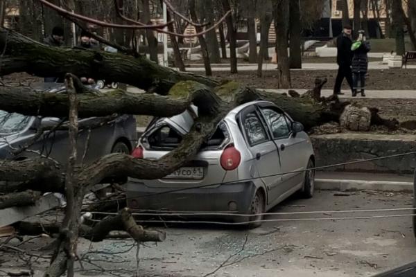 В центре Ростова две машины придавило сухое дерево