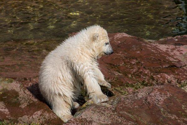 Медвежонок на трассе в Сочи едва не попал под машину