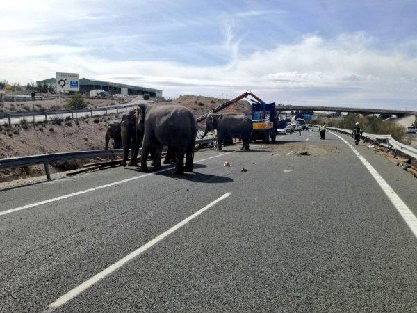 Цирковой фургон со слонами опрокинулся в Испании