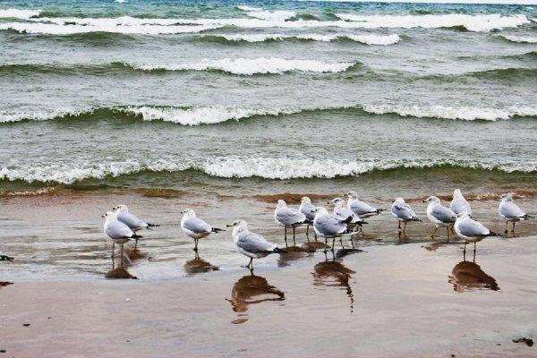 Власти Таганрогна не считают проблемой массовую гибель птиц