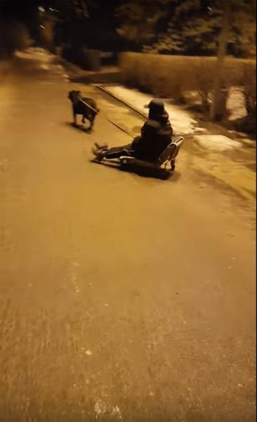 Волгоградский дрифт на собачей упряжке попал на камеру