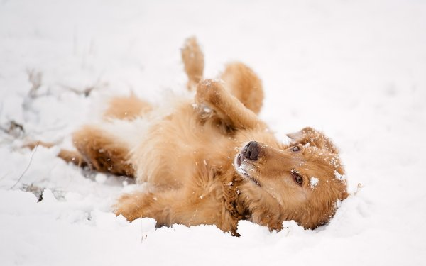 Девушка спасла тонущего пса в Ленинградской области