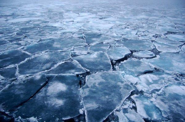 В Петербурге из-за обвинения в педофилии мужчина угрожал сжечь себя на льдине