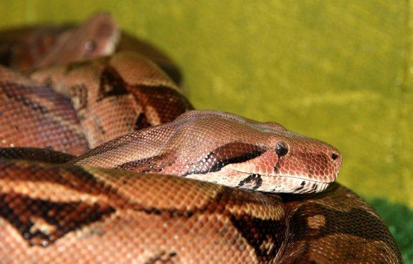 Змеи устроили «шабаш» около госпиталя в Ростове