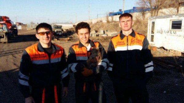 В Караганде толстого кота вытащили из дырки в бетонной плите