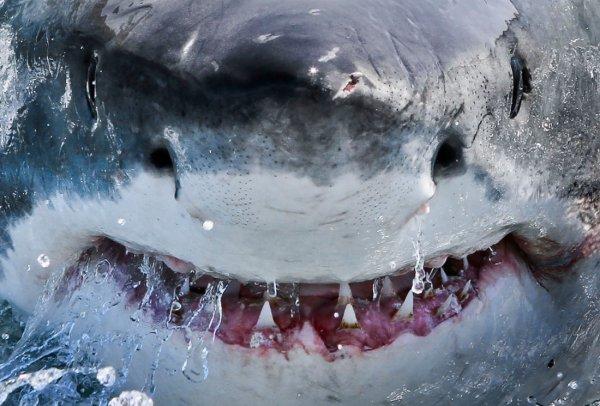 Акулы атаковали Таиланд: Из-за нашествия акул закрыт популярный туристический пляж