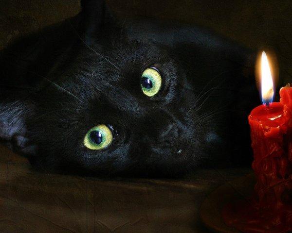 Черного кота сбросили на «Инфинити» с 9 этажа в Липецке