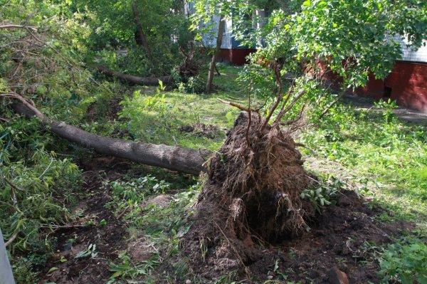 Во время урагана в Москве системы жизнеобеспечения сработали в штатном режиме