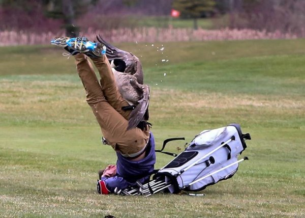 Злобный гусь напал на юного игрока в гольф в США