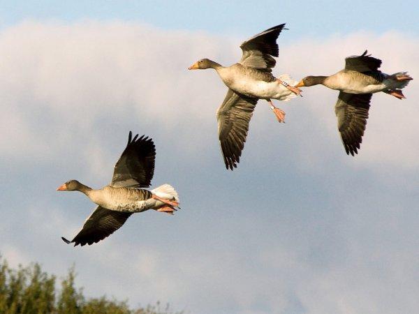СК расследует обстоятельства смерти мужчины во время охоты на гусей