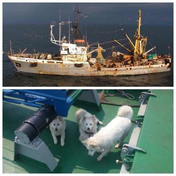 В Приморье щенкам без документов запретили сойти на берег