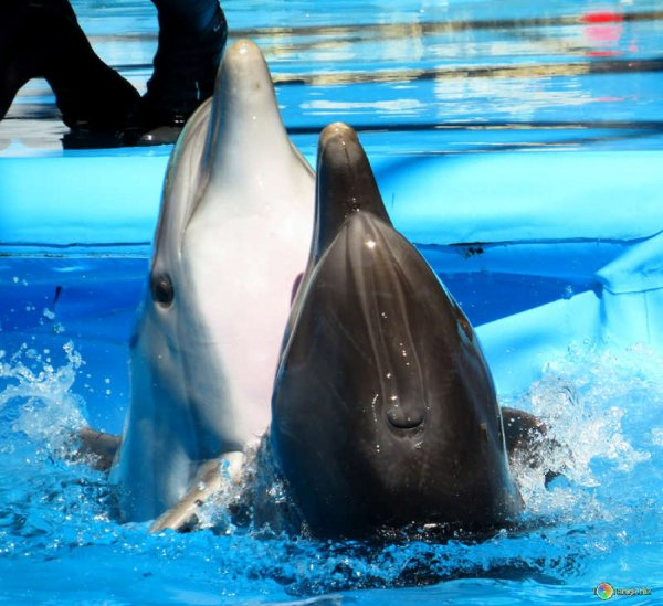 С начала года в Азовском и Черном морях массово погибают дельфины