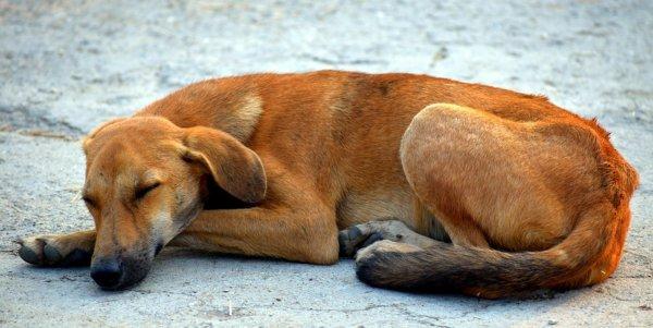 В Ярославле сбитый автобусом пес целую неделю пролежал в поле