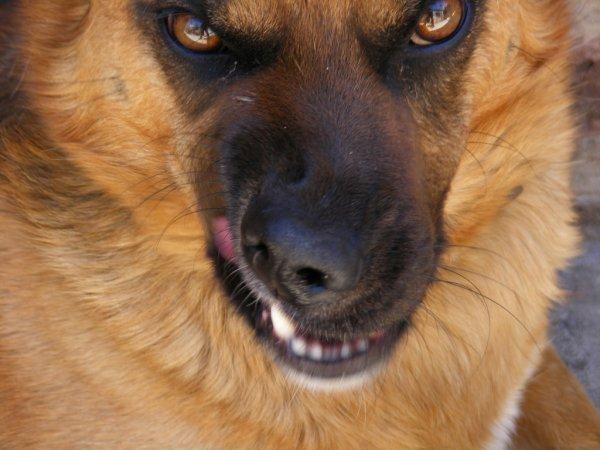 Бездомный пес чуть не разорвал детей в Оренбурге