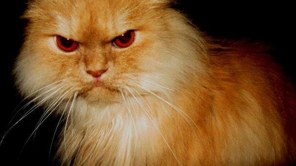 Сотрудника китайского посольства атаковал бродячий кот