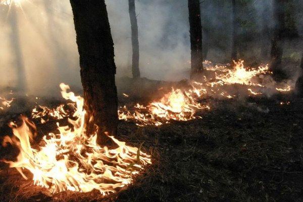 В Ставропольском крае объявлен чрезвычайно высокий уровень пожароопасности