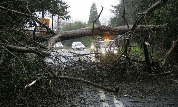 В Канаде из-за сильного ветра 200 домов остались без электричества