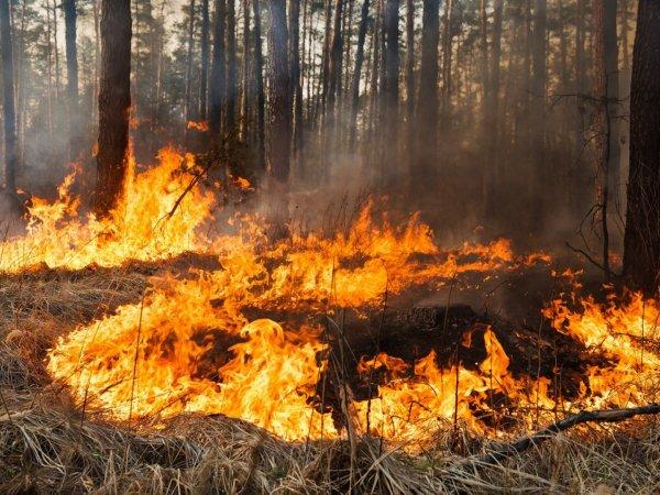 «Адский поезд», проехавший через лесной пожар, попал на видео