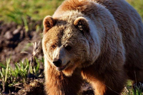 В Липецке от дрессировщиков в цирке-шапито сбежал медведь