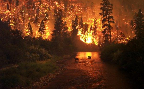 Житель Урала хотел сжечь мусор, а сжег лес