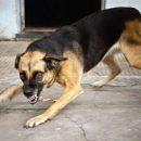 В Москве собака жестоко искусала 4-летнюю девочку