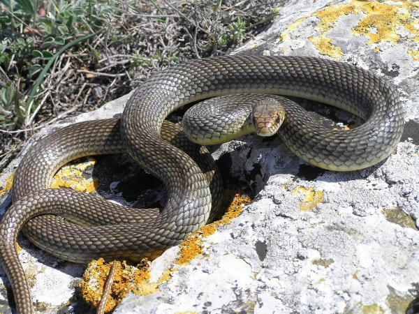 В Карелии змеи «атакуют» город